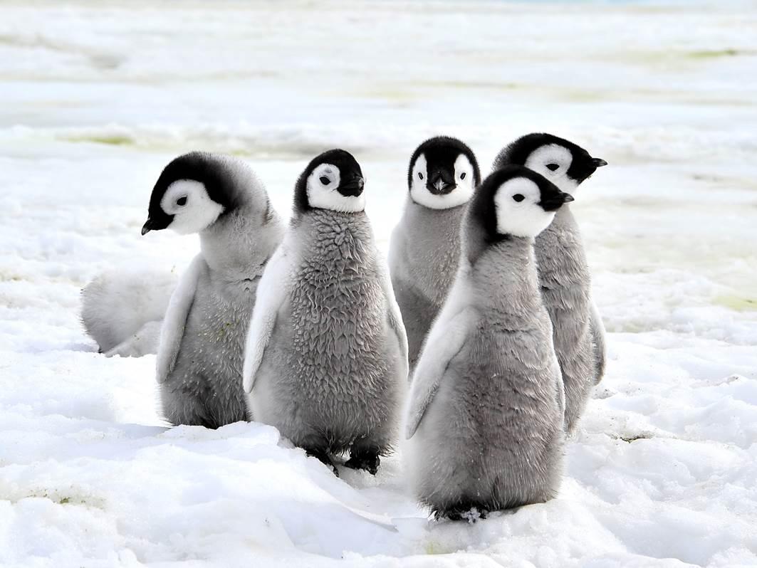 【2015年版】ペンギンアップデートの最新状況